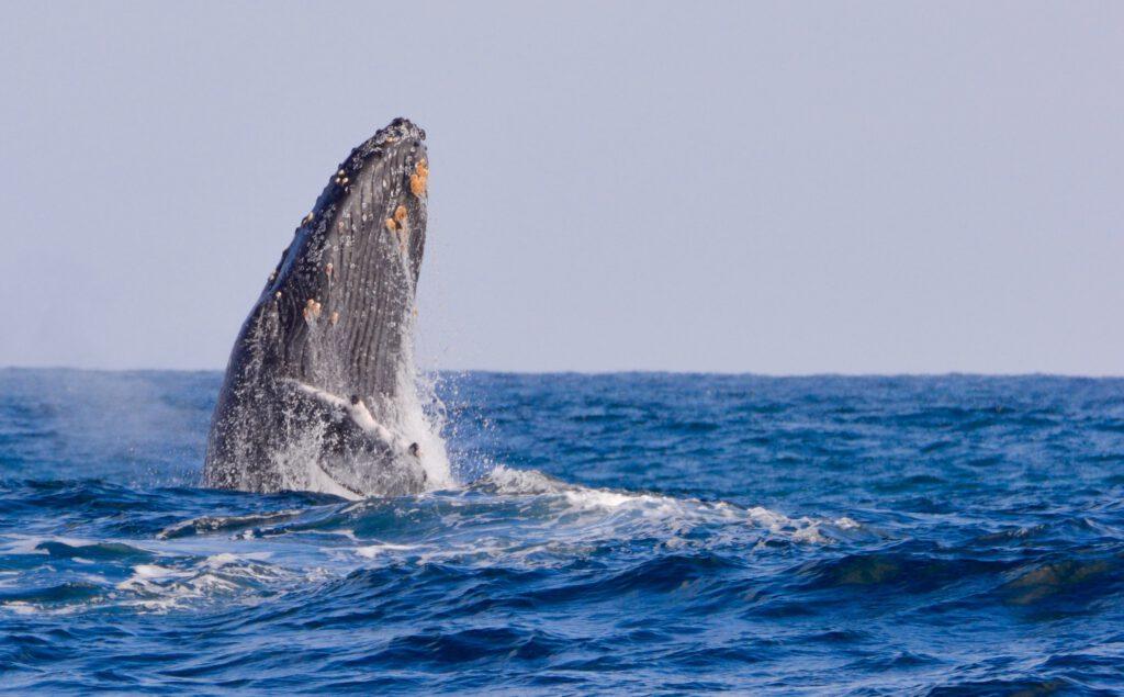 Observación Ballenas